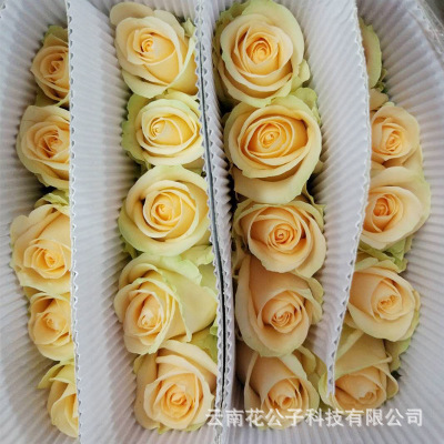 Yunnan base rose wholesale champagne rose valentine's day wedding 20 fresh cut flowers/tie