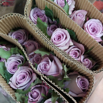 Song of the sea roses kunming lilac wedding bouquet roses wholesale 20 / bundle