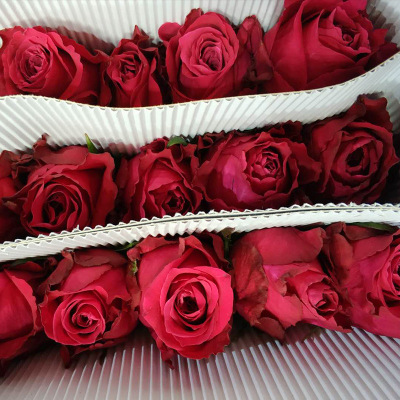 [shangri-la] base rose kumming red rose wholesale 20 branches/ bundles