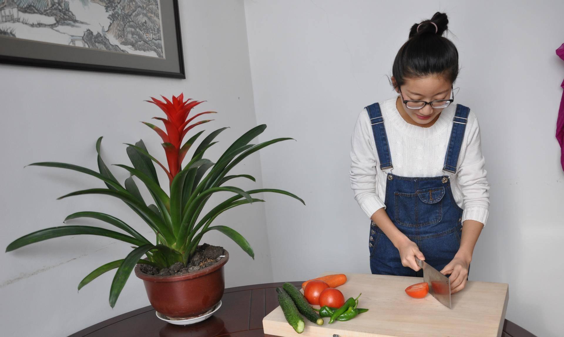 供应健康切菜板 整块天然实木抗菌防毒椴木菜板