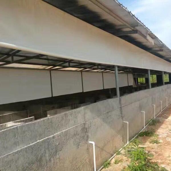 大型猪场帆布挡风布订做 鸡场卷帘布设计 养殖牛场窗帘保温安装方法