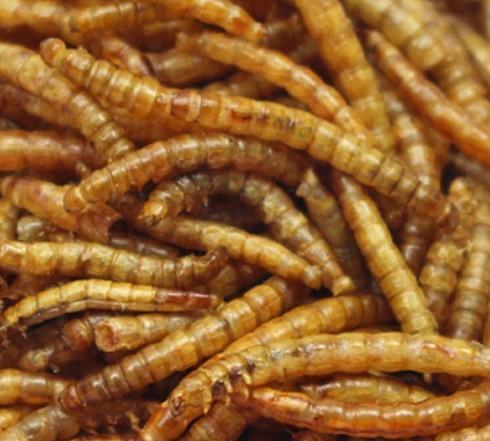 小宠物零食 香脆面包虫干 散装面包虫干/KG