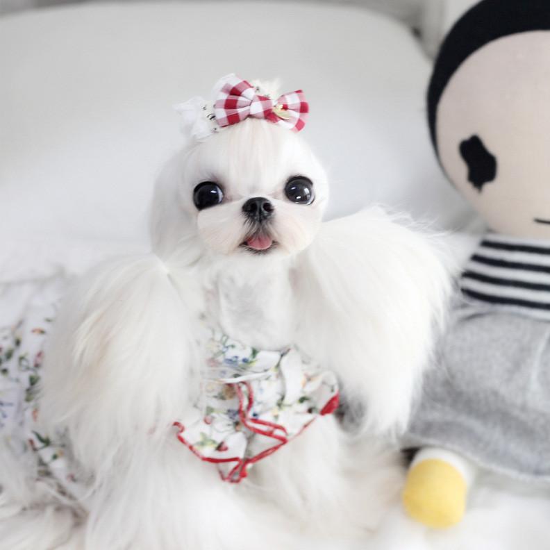AIPET宠物服饰2019夏季新款荷叶边飞袖可爱草莓印花娃娃衬衣裙